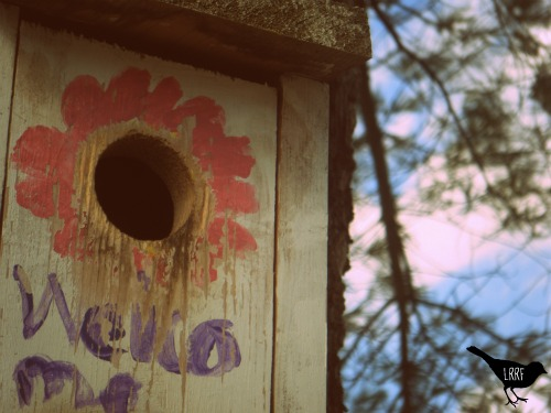 "A white Bluebird box with a pink flower painted arond the hole. The word ""welcome"" is painted underneath in purple. In the background, you see the blue sky and the boughs of a pine tree."