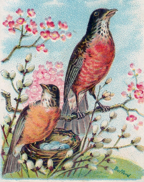 Vintage-Robins-Nest-Image-GraphicsFairy